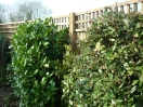 Close board fencing with trellis on top. The ideal fencing for privacy vs softness.