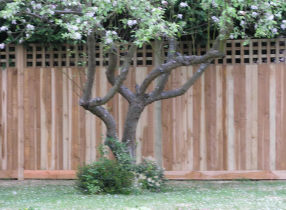 A 2.4 metre high close board fence with trellis in the top section.