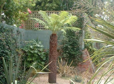 Gardens with tree ferns